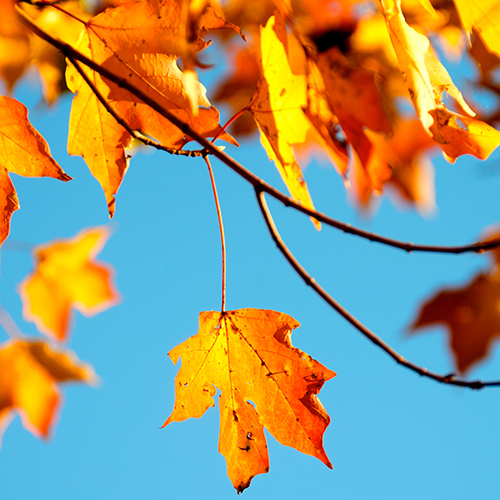 Ready to proceed directly to autumn?